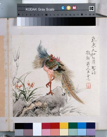 A phoenix standing on a rock