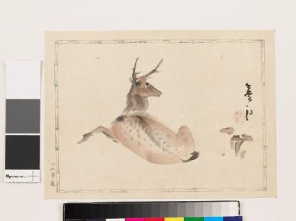 Resting deer with fungus