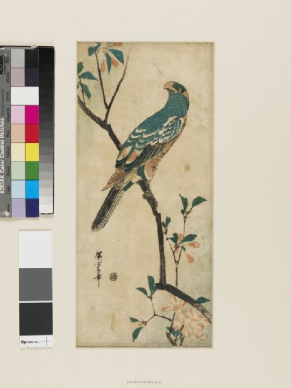Aronia and Parrot