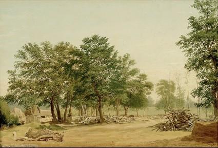 View in Bagley Wood, near Oxford