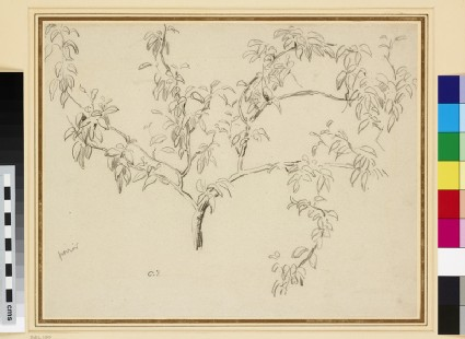 Study of the branch of a fruit tree