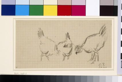 Study of three hens