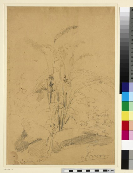 Recto: Study of a Plant