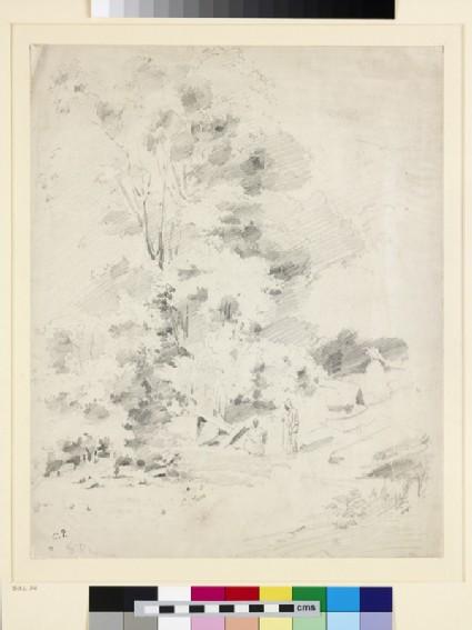 Wooded Landscape on St Thomas