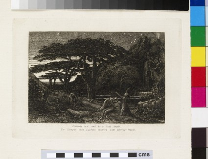 The Cypress Grove