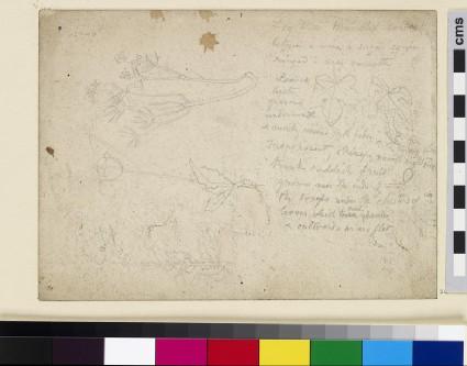 Recto: Studies of Leaves and Flowers Verso: Sketch of a Gipsy Caravan