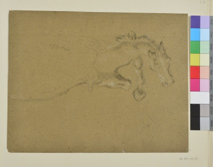 Study of the Foreparts of a Horse