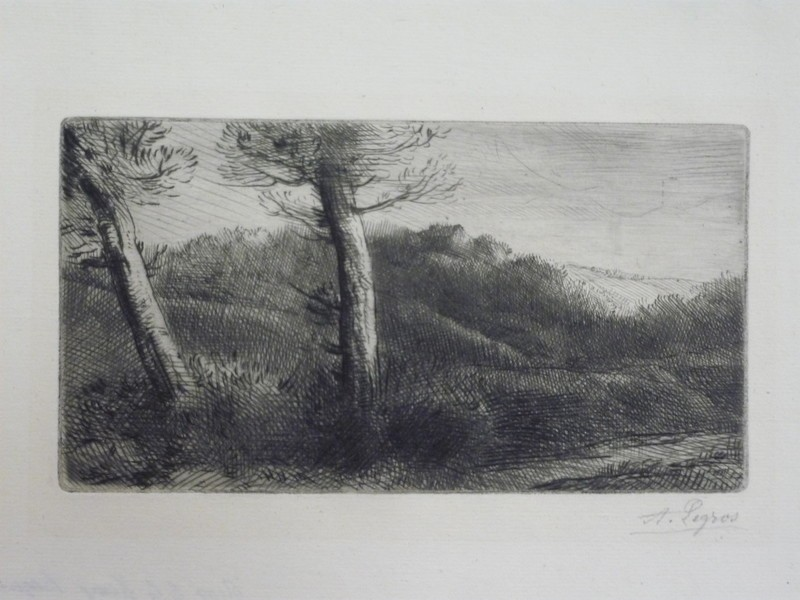 Two trees in a landscape